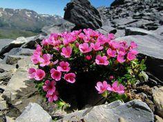 Lindas flores en rocas