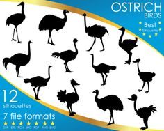 Hey, I found this really awesome Etsy listing at https://www.etsy.com/listing/514673333/12-silhouettes-ostrich-bird-birds-dxf