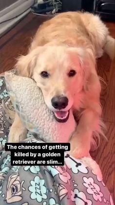 #doglover #dogoftheday #doglovers #pets #doglife #love #puppylove #pet #puppies #cute #dogsofinsta #puppiesofinstagram #instagram #of #doggo Super Cute Puppies, Cute Baby Dogs, Cute Funny Dogs, Cute Dogs And Puppies, Cute Funny Animals, Doggies, Funny Animal Quotes, Animal Jokes, Cute Animal Photos