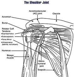 Why Does the Front of My Shoulder Hurt? The shoulder is a profoundly intricate joint. Unfortunately, it can also be a little high maintenance.