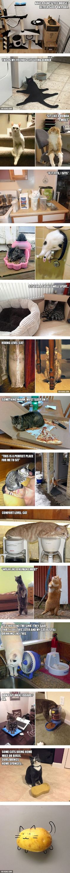 20 Funny Examples of Cat Logic - 9GAG http://ibeebz.com