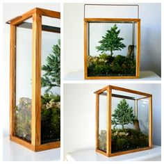 Want it for my living room shelves. Table Top Forest Terrarium by CaptainCat on Etsy, $120.00