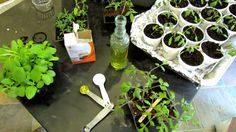 60 Seconds or Sow: How to Use Baking Soda to Fight Powdery Mildew - The Rusted Garden Blog