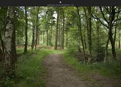 forest trail - Google Search