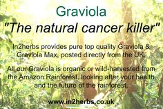 "Graviola ""Natural Cancer Killer"" Use Graviola as an alternative treatment or along side  your choice of treatment. Graviola keeps your immune system strong and helps you with the side affects of Chemotherapy. Graviola has been used for years to treat a number of different illnesses. Visit our website today read more.   We are based in the UK and posted directly to you so you wont face any nasty custom fees.  We always offer free shipping on our 100% pure Graviola."