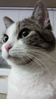 Annie Cat | Pawshake Kitchener