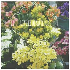 Life is beautiful. #flower #life #color #god #yellow