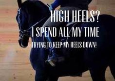 Discover and share Dressage Horse Quotes. Explore our collection of motivational and famous quotes by authors you know and love. Equine Quotes, Equestrian Quotes, Equestrian Problems, Horse Quotes, Equestrian Funny, Horse Sayings, Cowgirl And Horse, My Horse, Horse Love