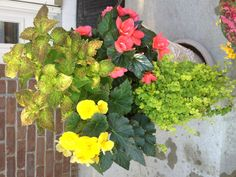 Shade loving flowers(from our front porch)
