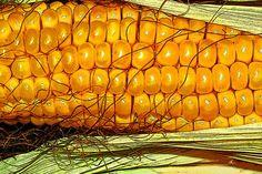 'Corn+Art'+von+Dirk+h.+Wendt+bei+artflakes.com+als+Poster+oder+Kunstdruck+$18.03