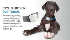 Track Your Dog with GPS Tracker Tagg #geekypets #dogs #pets