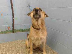 "11/20/16 -SAN BERNADINO, CA - ""GINA"" - 9 MONTHS OLD - puppy FEMALE - SWEET DOG - PLEASE SAVE THIS SWEET BABY GIRL!!! Urgent!"