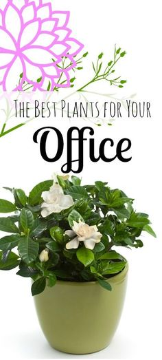 6 Best Plants for a Healthy Office @argyleoctopus needs some of this aromatherapy!