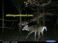 '07 Buck at Annual Scrape