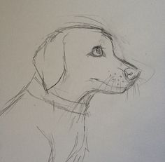 Sketches, Dog Sketch, Cat Art Illustration, Art Drawings, Pikachu Drawing, Animal Sketches Easy, Horse Drawings, Puppy Coloring Pages, Animal Drawings Sketches