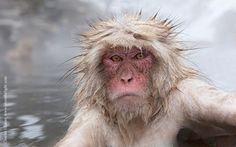 Snow Monkey Portrait by Charles Glatzer on 500px