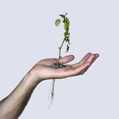 – David Cata grows a plant in the palm of his hand / Featured art – http://mindsparklemag.com/?sparkles%2Fdavid-cata-grows-a-plant-in-his-hand.html