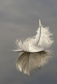 """Breathing in, I see myself as still water. Breathing out, I reflect things as they are."" ~ Thich Nhat Hanh * Swan feather floating on Hatchet Pond, Hampshire, England ♥ lis"