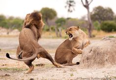 Mating discussion by Thomas Retterath on 500px