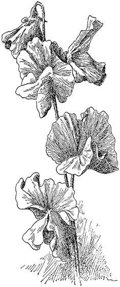 Free vintage digital stamps free digital stamp for Gerri the geranium coloring page