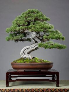 I really love the look of Bonsai trees. Please check out my website thanks. www.photopix.co.nz #bonsaitrees
