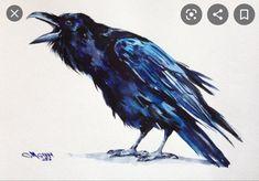 Watercolor Bird, Watercolor Tattoo, Watercolor Paintings, Raven Bird, Crow Art, Crows Ravens, Bird Artwork, Bird Drawings, Bird Pictures