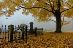 autumn cemetery---I love walking through cemeteries in the Fall.