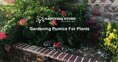 Natural pumice soil amendement increases the soil water conserving capabilities, provide oxygen to the root zone, increases circulation and makes a source of food for the plants to take. Pumice is one of a kind amendment, no other can provide the same benefits. #gardening #pumiceforplants #horticulture #gardensoil #gardenpumice Garden Soil, Gardening, Greenhouse Benches, Soil Texture, Pumice, Horticulture, Roots, Planters, Landscape