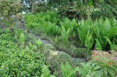 Bettinas blad. The japanese garden, Kew Botanical Gardens London.