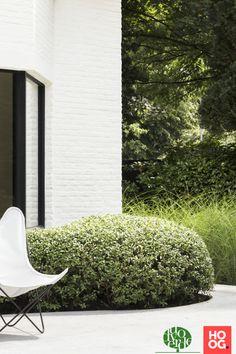 Mediterranean Garden, Outdoor Spaces, Villa, Elegant, Plants, Projects, Design, Potted Herb Gardens, Potted Garden