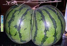 Funny memes Dream melons... Check more at…