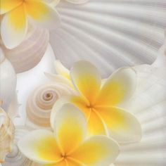 Plumeria & shells Two loves combined