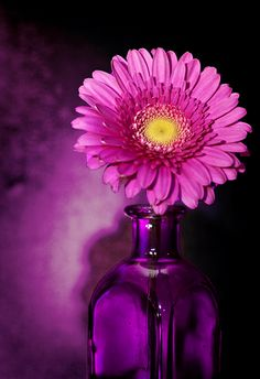 agoodthinghappened:  Pink  Purple by Photo Amy on Flickr.