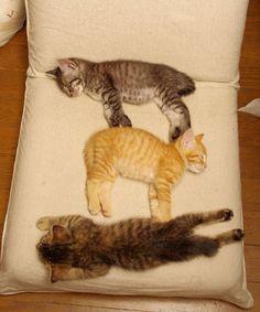 1 kitty, 2 kitty, 3 kitty.