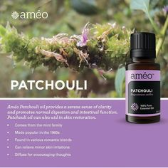 Patchouli ~~ Pogostemon cablin The Patchouli plant originated in Indonesia and comes from the Labiatae, or mint, family. Patchouli possesses a scent that was made widely popular in the 1960s, as it is often associated with grounding and relaxing meditation. Patchouli essential oil, which contains many beneficial constituents, is also found in various romantic blends. www.moringa247.myzija.com