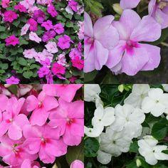 Blau blühende Pflanzen und Blumen bestimmen   Illustration ...