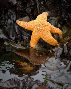10 tips for great tide pool photography #ocean #photography
