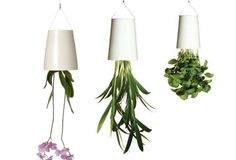 For your friends who have plants everywhere... except their ceiling!
