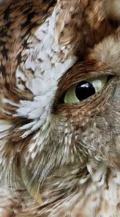 #owl #textured #feathers