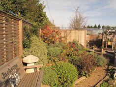 The Jacksons Fencing Natural Reflections show #garden in the late autumn sun | #garden #design