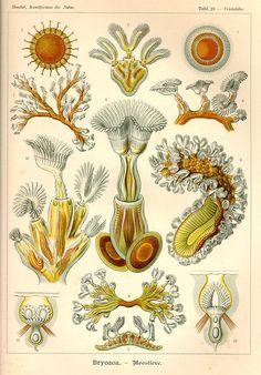 a billion tastes and tunes: scientific illustration  http://abilliontastesandtunes.blogspot.com