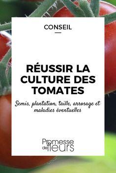 Au potager, la tomate est l\'un des légumes préférés des jardiniers. Pour la réussir, du semis à la récolte, découvrez les conseils de nos experts.