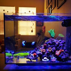 Intentionally putting my tank at risk this summer to understand if healthy pH range is a giant myth. Saltwater Aquarium Beginner, Saltwater Aquarium Fish, Saltwater Tank, Reef Aquarium, Tropical Freshwater Fish, Tropical Fish Tanks, Freshwater Aquarium, Nano Reef Tank, Reef Tanks