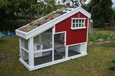 My friend from Vancouver Island took a break from his new aquaponics business to build himself a chicken coop. I'm thinking he should get into the coop game full time. - Imgur