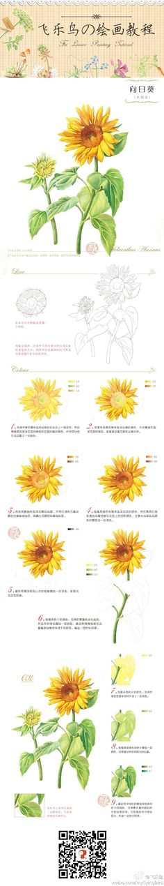 Step by step colored pencil drawing of a sunflower.