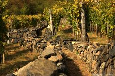 Utazom.com travel agency - wine region called Somló Hill Travel Agency, Volcano, Hungary, Wines, Volcanoes