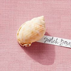 Scotch Bonnet - America's Most Popular Seashells - Coastal Living