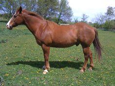 My horse Nick