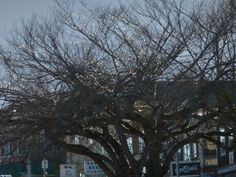 Welcome to Friday Harbor~tree at the foot of Spring Street~San Juan Island photo by Joanne