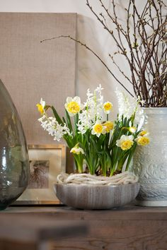 How To: Flower Bulb Forcing   Willard and May Outdoor Living Blog